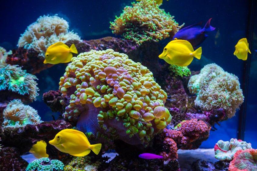 background of the underwater world